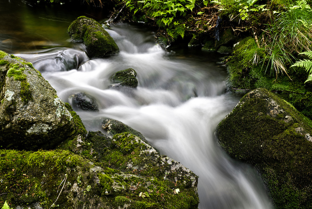A small forest stream at Dalsnuten, Rogaland, Norway