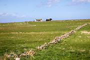 Small detached bungalow house, Holy Island, Lindisfarne, Northumberland, England, UK