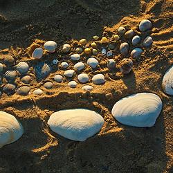 Shell collection on Bound Brook Island, Cape Cod National Seashore, Wellfleet, Massachusetts.