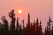 Boreal forest at sunrise at Lac Seul<br />Ear Falls<br />Ontario<br />Canada