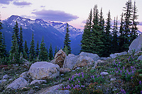 Whistler Mountain summer sunset, with a meadow of lupin and wildflowers in the foreground.