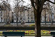 Primulas in a small park on the Il de la Cite. Paris, France, Europe