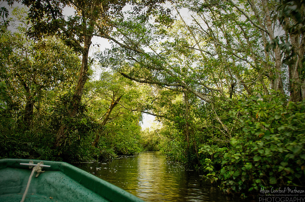 Boating on the Klias River, in the Klias Forest Reserve, Sabah, Malasian Borneo. For more information, visit http://cheeseweb.eu/2013/06/cruising-sabahs-klias-river-photos/