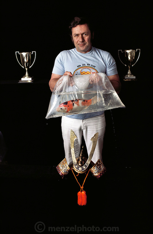 "Covarelli, with his prize-winning Koi and previously won trophies at his home in California. Koi are a variety of the common carp, Cyprinus carpio. Today Koi are bred in nearly every country and considered to be the most popular fresh-water ornamental pond fish. They are often referred to as being ""living jewels"" or ""swimming flowers"". If kept properly, koi can live about 30-40 years. Some have been reportedly known to live up to 200 years. The Koi hobbyists have bred over 100 color varieties. Every Koi is unique, and the patterns that are seen on a specific Koi can never be exactly repeated. The judging of Koi at exhibitions has become a refined art, which requires many years of understanding the relationship between color, pattern, size and shape, presentation, and a number of other key traits. Prize Koi can cost several thousand dollars  USA. MODEL RELEASED.  USA. MODEL RELEASED."