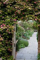 Looking through doorway into The Rose Garden at Sissinghurst Castle. Wall covered with Actinidia