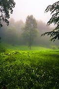 Lush green meadow with a tree in the middle veiled in fog