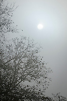 The morning sun breaks through the mist in northern, Maryland, USA.