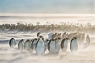 Penguins / Pingüinos