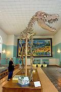 ULAN BATOR, MONGOLIA..08/22/2001.Museum of Natural History. Dinosaur skeleton (T-Rex)..(Photo by Heimo Aga)
