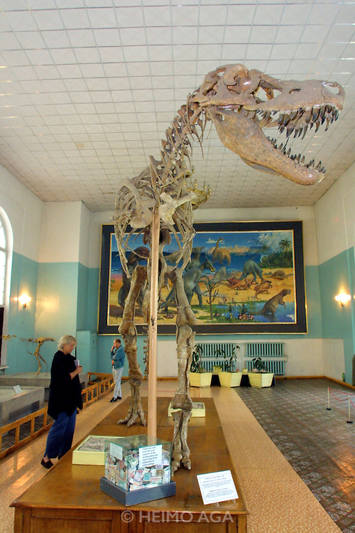 ULAN BATOR, MONGOLIA..08/22/2001.Museum of Natural History. Dinosaur skeleton (T-Rex)..(Photo by Heimo Aga)