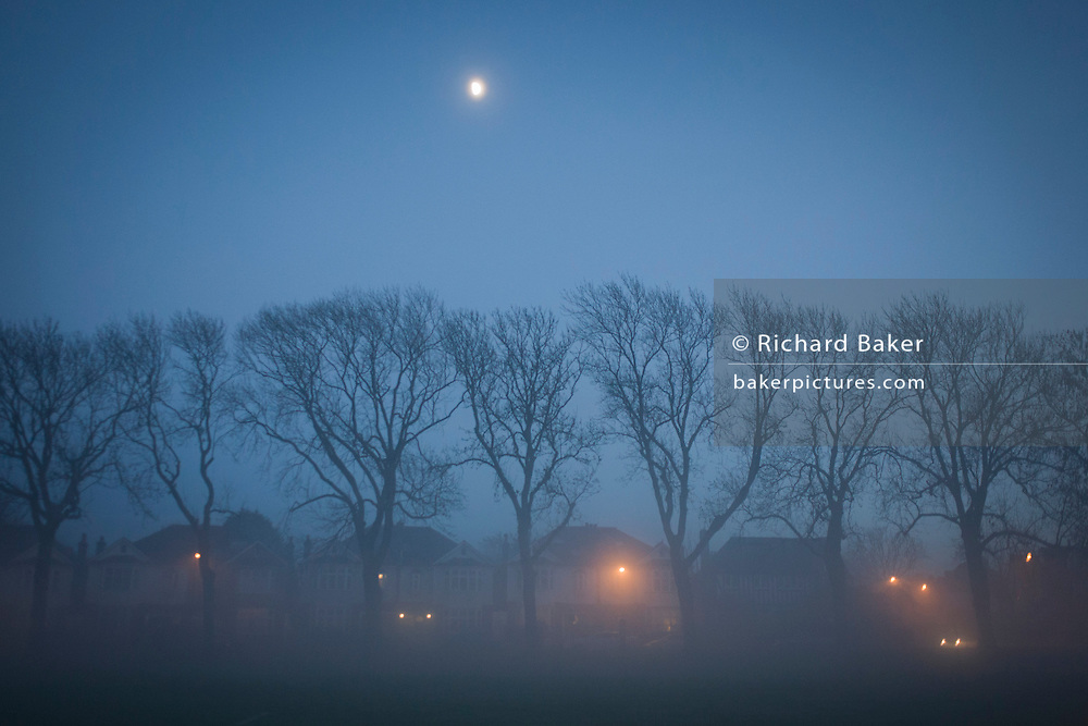 Edwardian homes beneath the moon and tall 100 year-old ash trees on a misty evening.