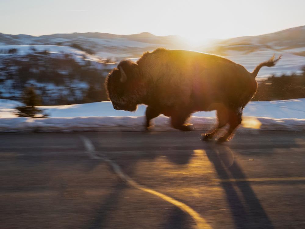 North America, United States, Wyoming, Yellowstone National Park