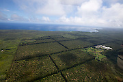Big Island. Helicopter flight over Hawai'i Volcanoes National Park. Macadamia nut plantations near Hilo.