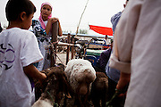 Kashgar: A young woman watched on as Uighur men discuss prices for sheep at the weekly sunday market on the outskirts of Kashgar...Despite the migration of millions of Han Chinese to the western part of the Xinjiang Uighur Autonomous Region, the Uighur community continue to practice their muslim culture and resist the suppression of their cultural and religious traditions by the Chinese government....The chinese government has been criticised for the redevelopment of the old city, which has involved the destruction of many of the old houses in the town that were built without regulation, officials claiming them to be overcrowded and uncompliant with earthquake codes...Many in the chinese government believe Kashgar to a breeding ground for Uighur separatists, who Beijing claim to have links to terrorism...The european parliament has called for a halt to the cultural destruction of Kashgar, suggesting that Kashgar be added tot he UNESCO World heritage 'Silk Road' project, and calling on the chinese government to develop a genuine Han-Uighur dialogue to adopt more inclusive and comprehensive economic policies in Xinjiang in order to protect the cultural identity of the Uighur population..©JTanner/July 2011