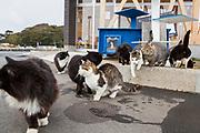 I hamnen p&aring; &ouml;n Tashirojima i Japan bor n&aring;gra katter. De h&auml;lsar bes&ouml;kare v&auml;lkomna.<br />  <br /> Tashirojima kallas f&ouml;r &quot;katt&ouml;n&quot; eftersom h&auml;r lever hundratals katter tillsammans med ca 50 personer.   <br /> <br /> Ishinomaki, Miyagi Prefecture, Japan. <br /> <br /> Fotograf: Christina Sj&ouml;gren<br /> Copyright 2018, All Rights Reserved