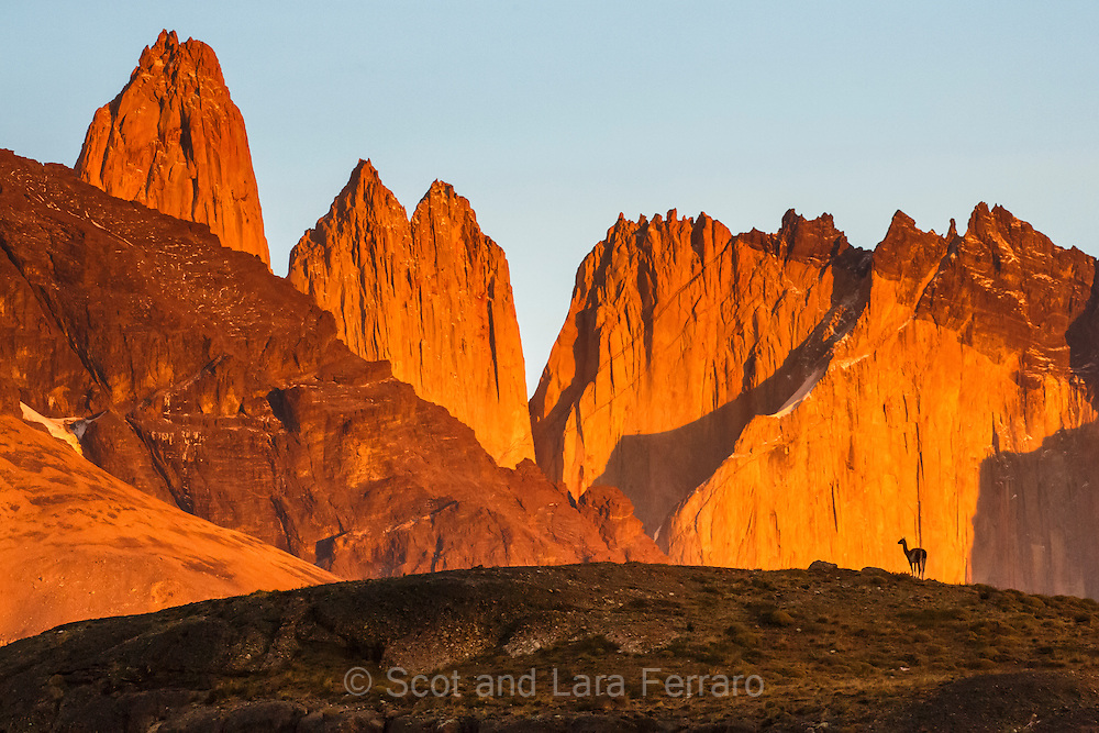 A guanaco is silhouetted against the peaks in Torres del Paine National Park in Chile.