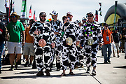 March 16-18, 2017: Mobil 1 12 Hours of Sebring. Fans dressed as cows during the 12 hours of Sebring