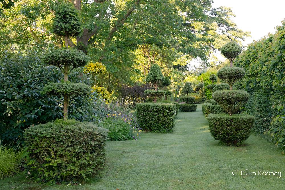 Taxus Baccata, elaborate Yew topiary in the Elizabeth Tudor Walk at the Laskett Gardens, Much Birch, Herefordshire, UK