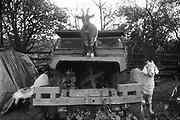 Posing Goats, Exodus Free Festival, Luton, 1997.