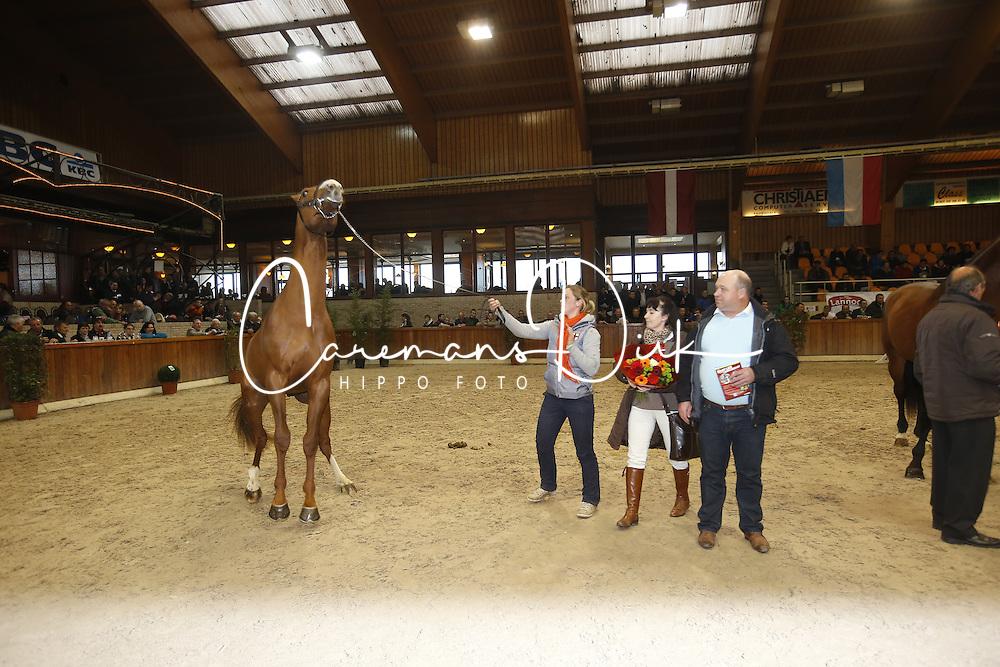 40 - Leipheimer van't Verahof<br /> BWP Hengstenkeuring 2014<br /> Zilveren Spoor Moorsele 2014<br /> &copy; Dirk Caremans