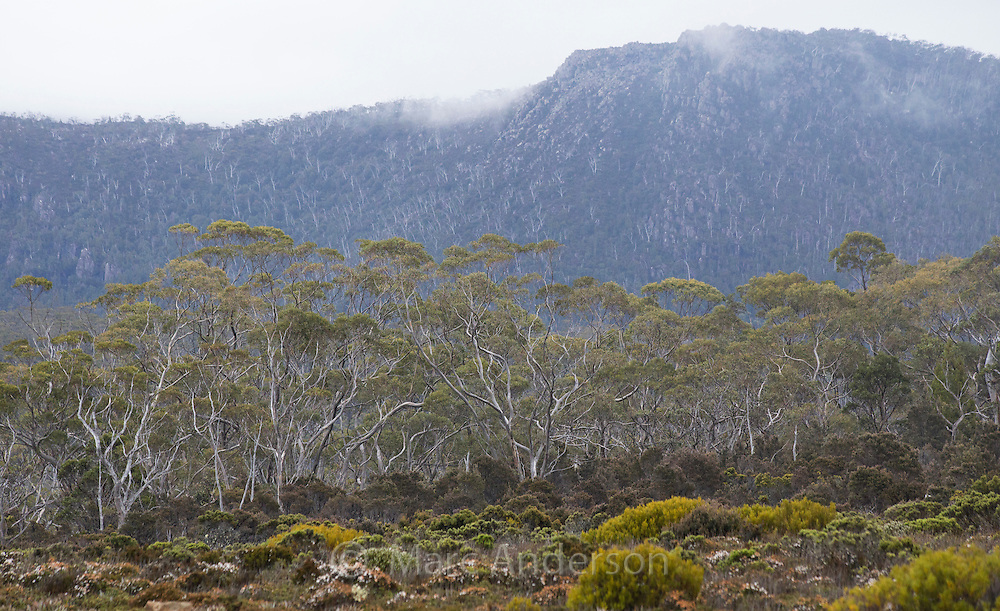 Heathland and forest on a rugged alpine plateau in Mount Field National Park, Tasmania, Australia