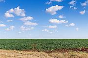 Pasture field under blue sky with cumulus clouds near Kumbia, Queensland, Australia