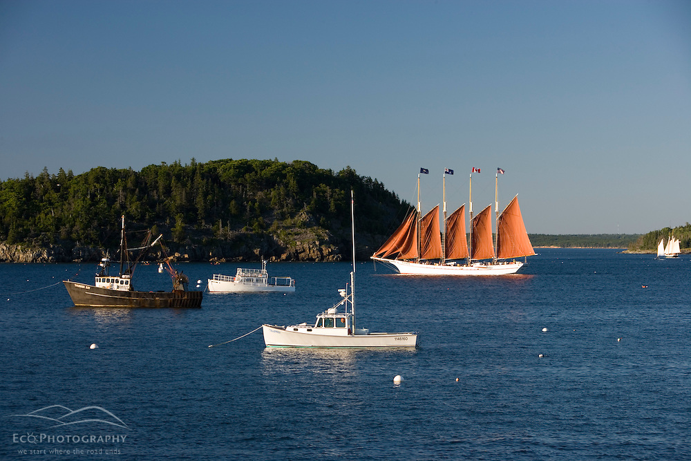 The four masted schooner sets sail in Frenchman Bay  Bar Harbor Maine USA