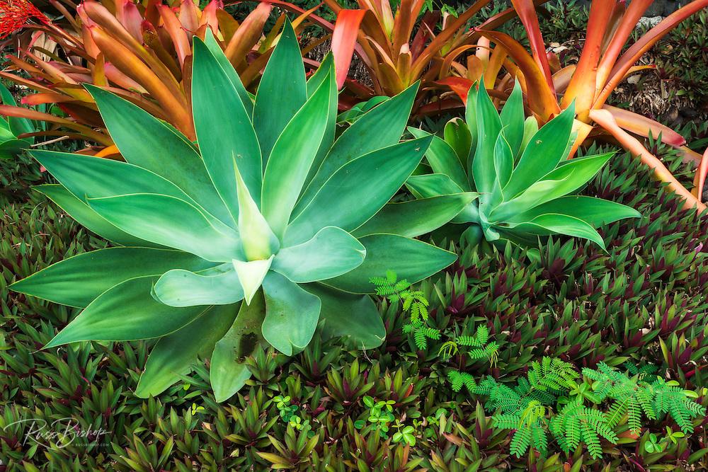 Tropical plants at Paleaku Gardens Peace Sanctuary, Kona Coast, The Big Island, Hawaii USA