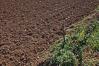 View of ploughed agricultural field