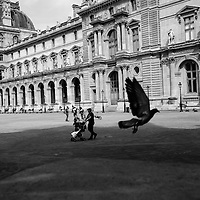 A bird takes flight at The Louvre in Paris, France 2015.