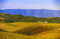 Brousseau Vineyards near the Pinnacles, Monterey County, California USA