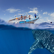 Over-under photo of whale shark (Rhincodon typus) below tour banca boat, Honda Bay, Palawan, the Philppines.