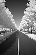 Center line of road surrounded by trees at Keeneland, Lexington, Kentucky.  Infrared (IR) photograph by fine art photographer Michael Kloth. Black and white infrared photographs