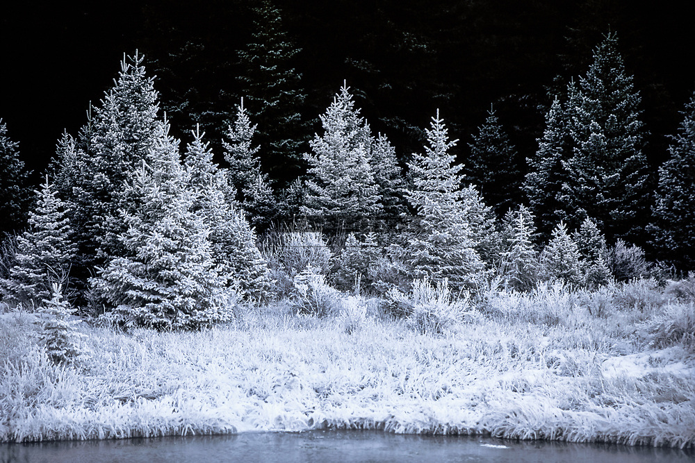 Frosty trees on a cold morning along the river bank of the Gallatin River in Montana.  Limited Edition - 75