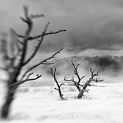 Dead Ghost Trees - Mammoth Terrace Hot Springs - Yellowstone National Park - Black & White - Lensbaby
