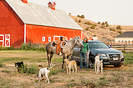 Ranch, cowgirl, quarter horse, barn, Montana.