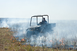 "Gwen Hoy, owner of the Flying W Ranch near Clements, Kansas controls the burning of ranch prairie during the ""Flames in the Flint Hills."" This agritourism event allows ranch guests to take part in lighting the prescribed burns. Prairie grasses in the Kansas Flint Hills are intentionally burned by land mangers and cattle ranchers in the spring to prepare the land for cattle grazing and help maintain a healthy tallgrass prairie ecosystem. The burning is also an effective way of controlling invasive plants and trees. The prairie grassland is burned when the soil is moist but grasses are dry. This allows the deep roots of the grasses to survive and the burned grasses on the soil surface return as nutrients to the soil. These nutrients allow for the rapid growth of new grass. After approximately two weeks of burning, new grass emerges. Less than four percent of the original 140 million acres of tallgrass prairie remains in North America. Most of the remaining tallgrass prairie is in the Flint Hills in Kansas."