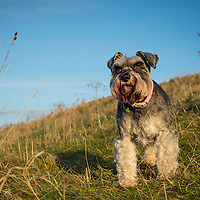 Images of Holly at Devil's Dyke