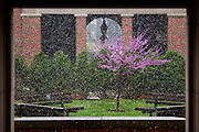 Spring snow in the courtyard of Scott Quad at Ohio University on April 15, 2014..  Photo by Ohio University / Jonathan Adams