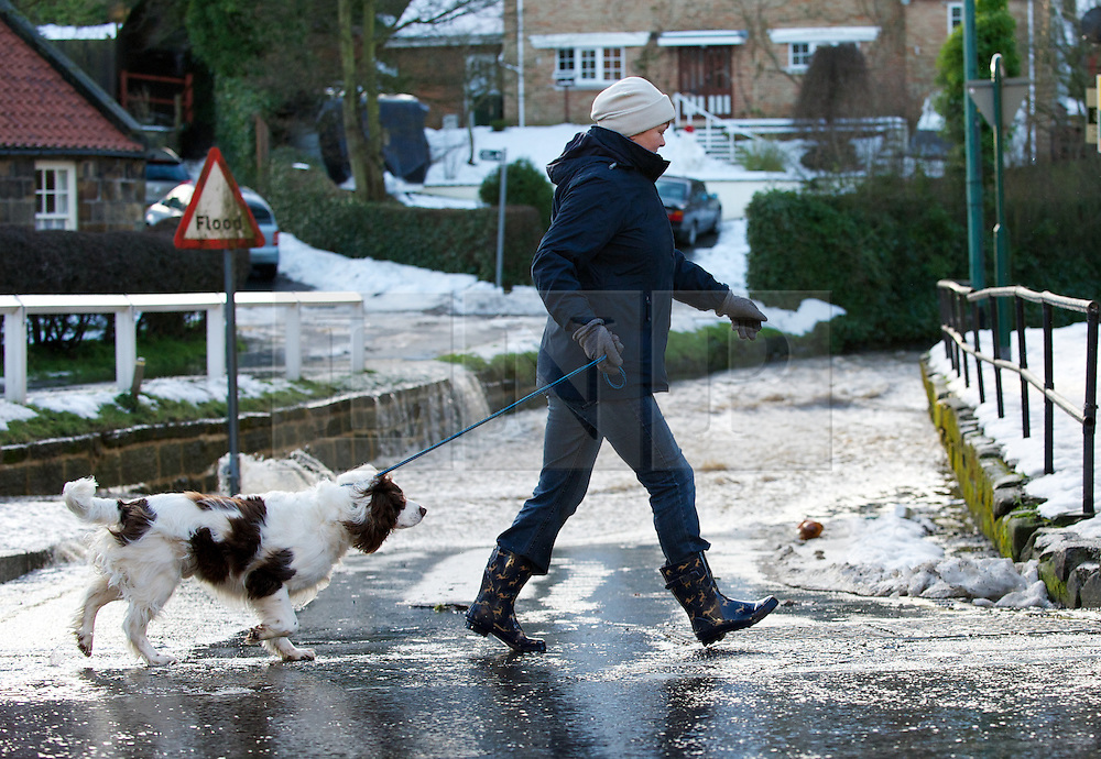 © Licensed to London News Pictures. 27/01/2013..Cleveland, England, UK..Following the recent snowfall a fast thaw through the night brought heavy flooding to some parts of Cleveland and North Yorkshire with many roads closed...A woman walks her dog in the flooding at Loftus in Cleveland..Photo credit : Ian Forsyth/LNP