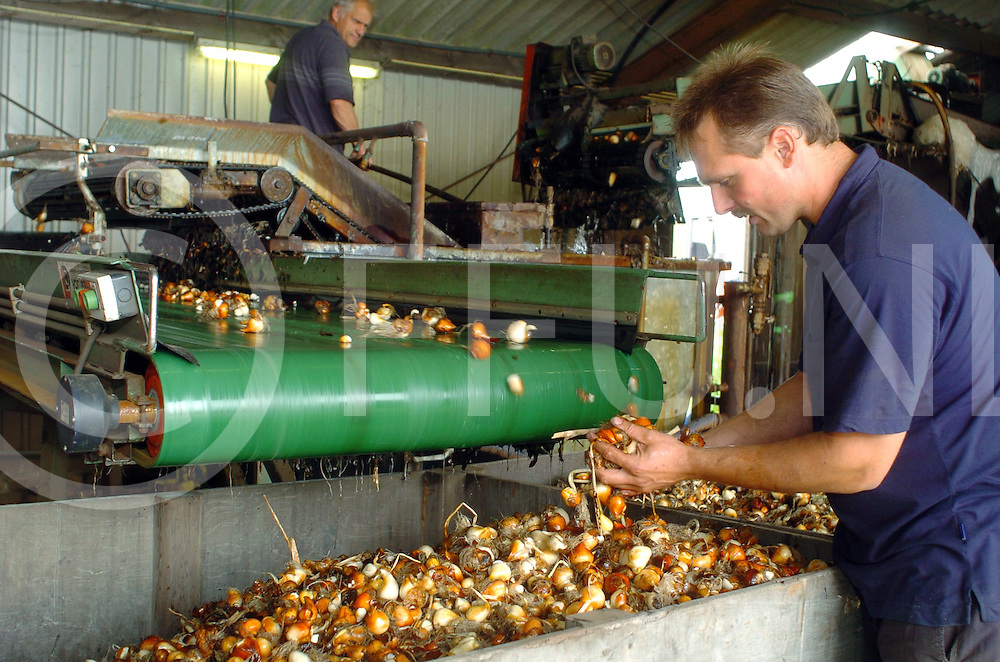 060707, sibculo, ned,<br /> Herman Schukkert is akkerbouwer en samen met zijn collega zitten ze tevens ook in de bloembollen,<br /> fotografie frank uijlenbroek&copy;2006 michiel van de velde