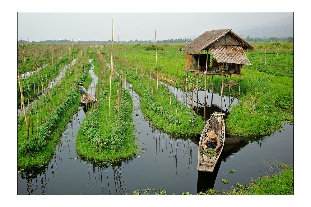 LARGE version - 12&quot;X8&quot; (30X20 cm) <br /> Farmers grow tomato plants on floating gardens. These fertile gardens are skilfully made from lake-bottom weeds turned into floating beds anchored to bamboo poles. A set of special edition prints on offer at a special price to raise money for the earthquakes that devastated Central Italy and Central Myanmar at the end of August 2016. Each print comes with a wide border on fine-art paper ready to be framed on standard size mounts. <br /> I will donate all profits to charities helping the victims of the earthquakes.