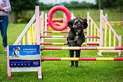 Sunday 7th July 2019, Dorset, England. Krazy K9s Fun Day, Longburton, Dorset, England on Sunday 7th July 2019<br /> <br /> PHOTOGRAPH BY AND COPYRIGHT OF Simon de Trey-White<br /> <br /> email: simon@simondetreywhite.com<br /> photographer in England +44 7484 864398