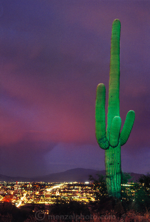 Time exposure image of Tucson, Arizona with a giant saguaro cactus (Carnegiea gigantea) in the foreground.