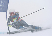 2/24/06 -- The 2006 Torino Winter Olympics -- Sestriere , Italy. -- Alpine Skiing women's giant slalom -- .Team USA Skier Julia Mancuso speed past a gate during heavy snow on her second run in the women's giant slalom event. Mancuso held on to her lead to take the gold medal...Photo by Scott Sady, USA TODAY staff..