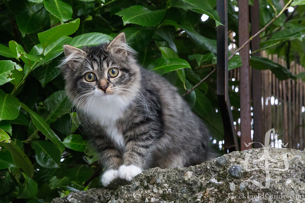 While touring Austria, we came across this stray kitten who seemed as interested in us as we were in it.