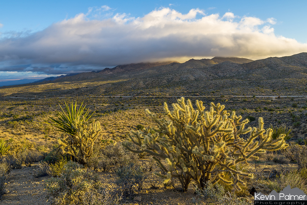 Early morning light shines on a yucca plant and a large cholla cactus. The foothills of the Providence Mountains are partially obscured by a low cloud. The road in between is Kelbaker Road.<br />