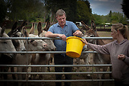 Proprietor Tom Tuohy and volunteer Natalie Bodell working at Alwood Farm Donkeys, at Upton, Wirral. Mr Tuohy runs the family business which hires out donkeys for events, functions, parties and guest appearances, such as in the arts and on television. Due to the coronavirus outbreak and lockdown restrictions, all his bookings for the foreseeable future have been cancelled and he has had to let staff go. He works every day by himself and with a couple of volunteers looking after his 20 donkeys, feeding, grooming and caring for them.<br /> <br /> These photographs were taken in accordance with the UK Government's advice at the time on maintaining social distancing whilst working.