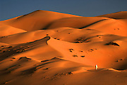 A bedouin camel trader wanders into the desert of the Empty Quarter, United Arab Emirates