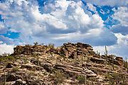 The Sonoran Desert along the Tanque Verde Ridge Trail in Saguaro National Park, Arizona